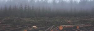 Tåke og skog